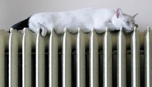 Когда в Ульяновске дадут тепло?