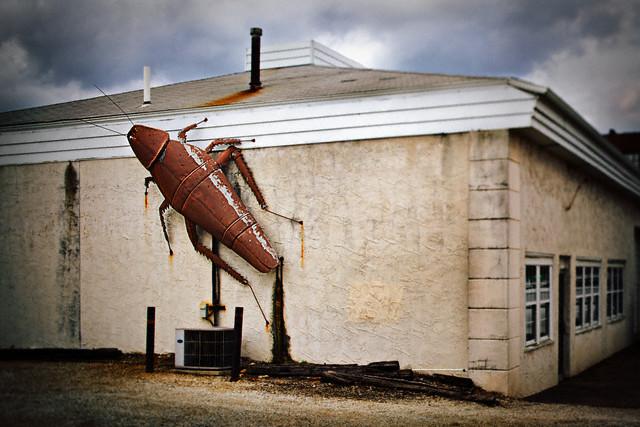 тараканы дома фото