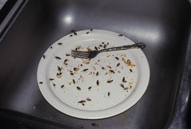Как появляются тараканы