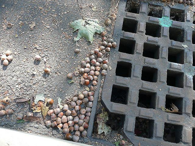 заявление на ремонт дороги во дворе образец