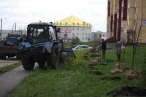 Посади и вырасти своё дерево