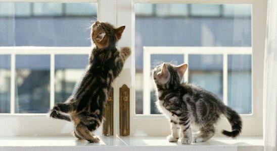 Что делаеть, если в квартире не работает вентиляция, котики на окне