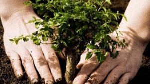 Этой осенью в Ульяновске посадят 3 тысячи деревьев и кустарников