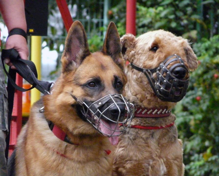 Обязаны ли жильцы выгуливать собак в наморднике