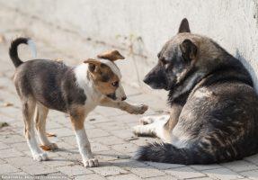 Служба по отлову собак как пожаловаться